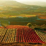 4 razones para visitar las bodegas de la Rioja Alavesa