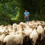 Pastor por un día en el País Vasco