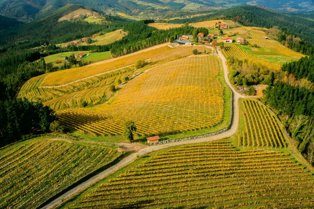 Vista aérea del viñedo de bodega Berroja