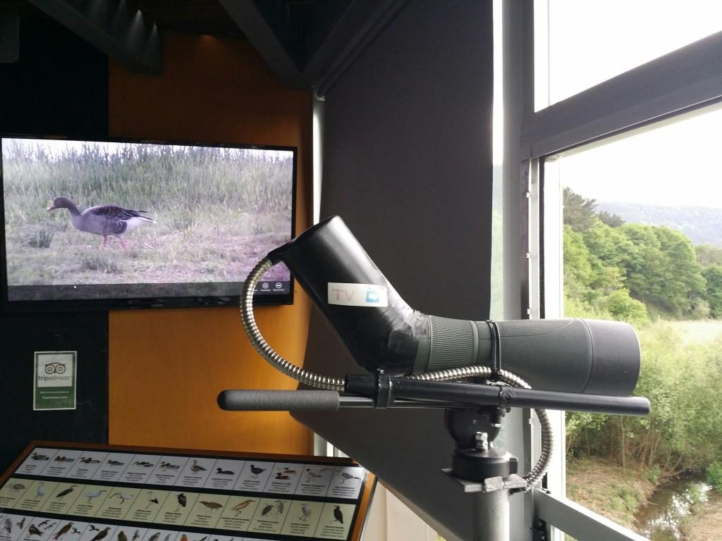 Prismatico con visión en tv, Urdaibai Bird Center