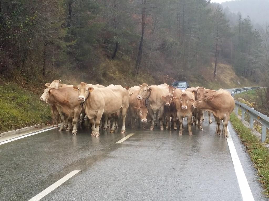 Carretera del Pirineo navarro