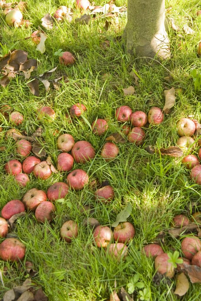 Manzanas caidas, Sagardotegiak