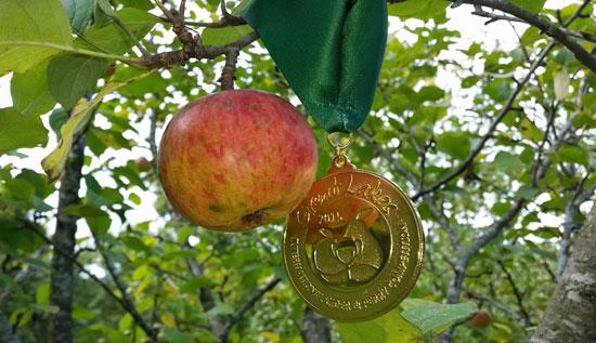 Medalla GLINTCAP Bereziartua