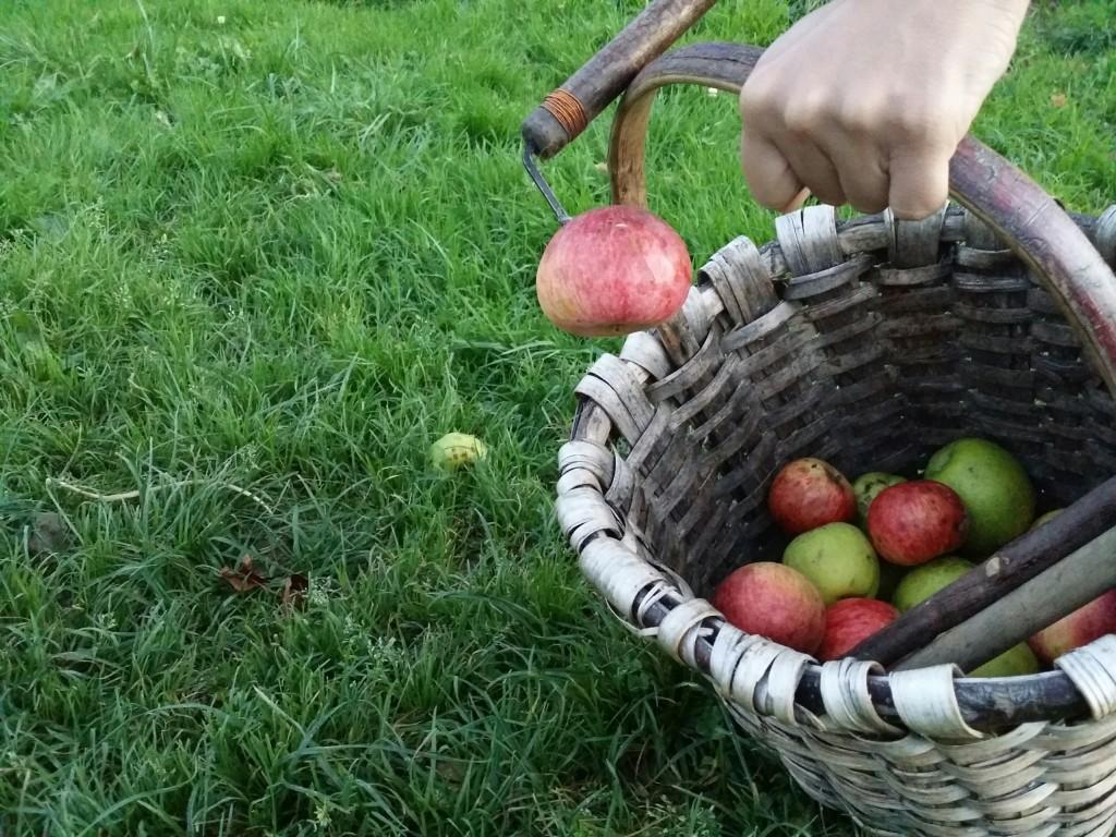kizki, utensilio para coger manzanas en Sagardoetxea