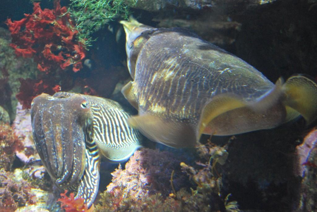 Jibias Aquarium San Sebastián
