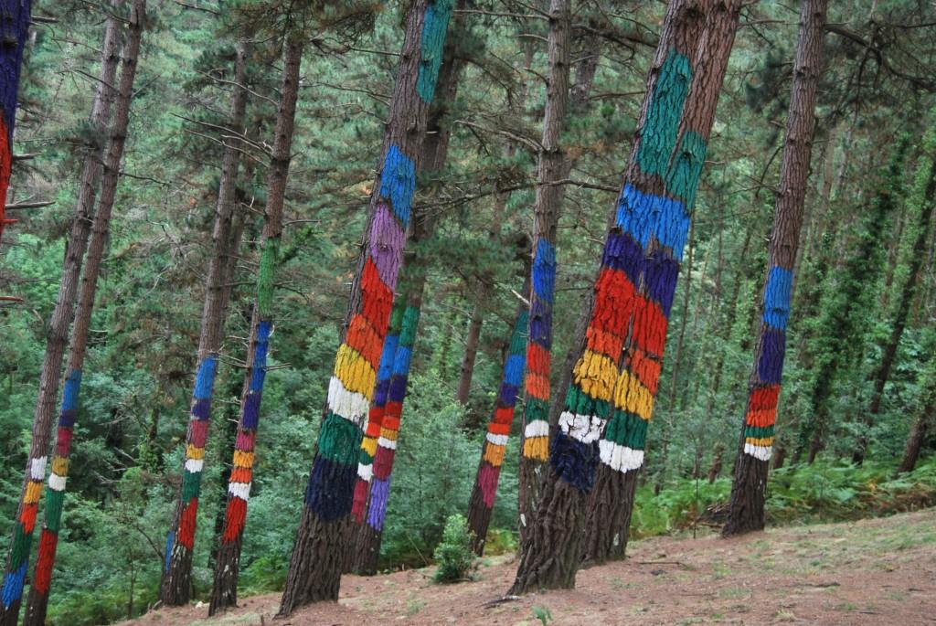 Arcoiris en el bosque de Oma