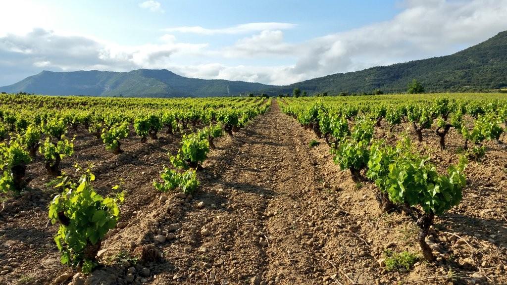 Ruta entre viñedos, Rioja Alavesa