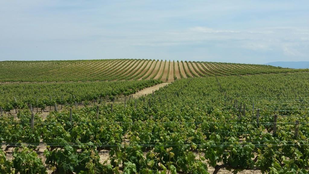 Viñedos Rioja Alavesa