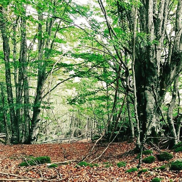 bosque-arboles-musgo