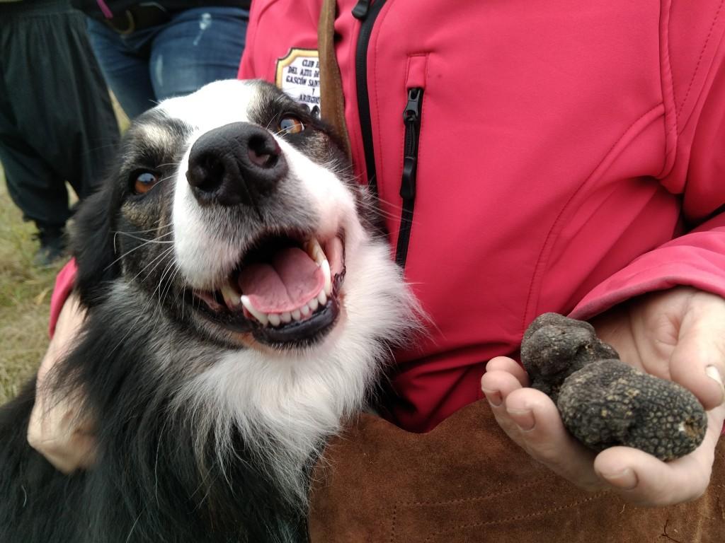 perro-buscador-de-trufas