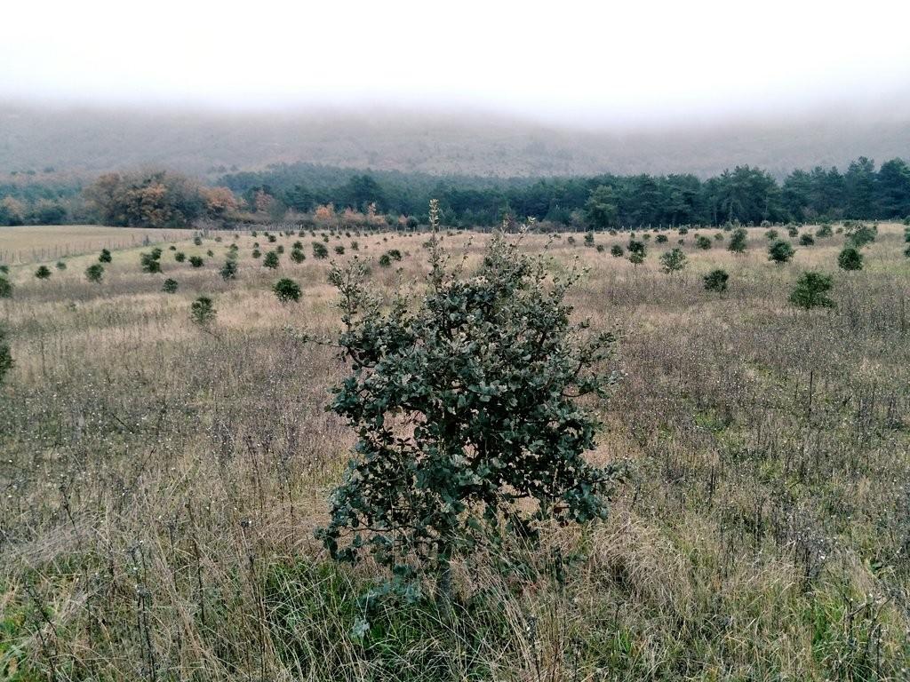 plantacion-de-encinas-en-araba-criadero-de-trufas