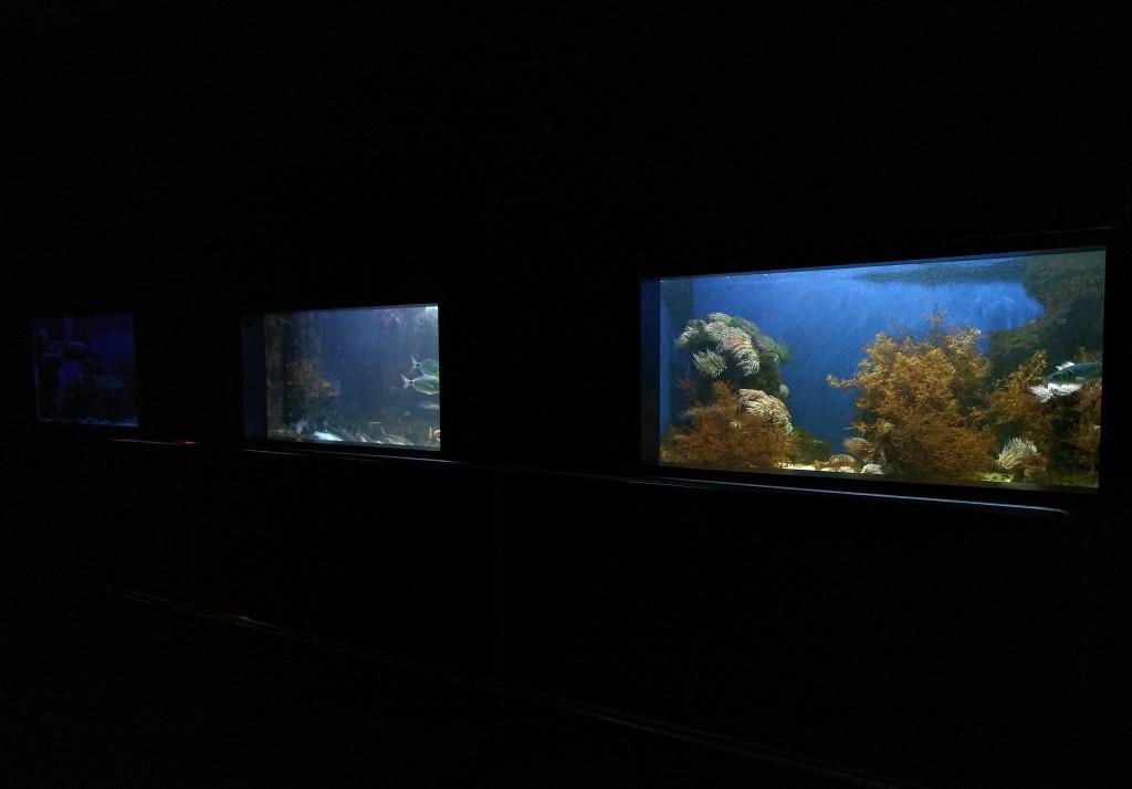 Interior Getxo Aquarium