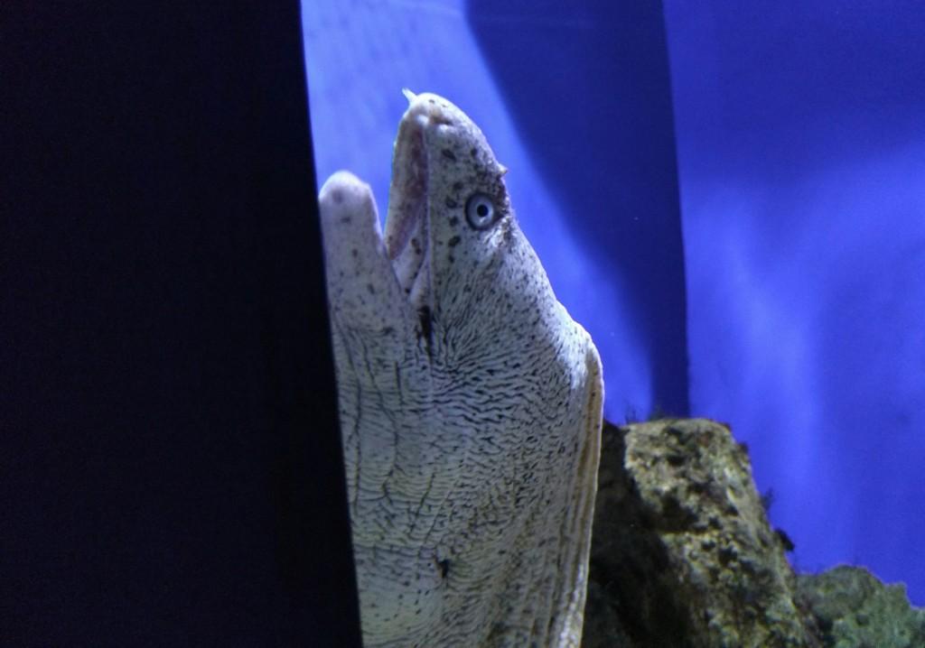 Morena, Getxo Aquarium