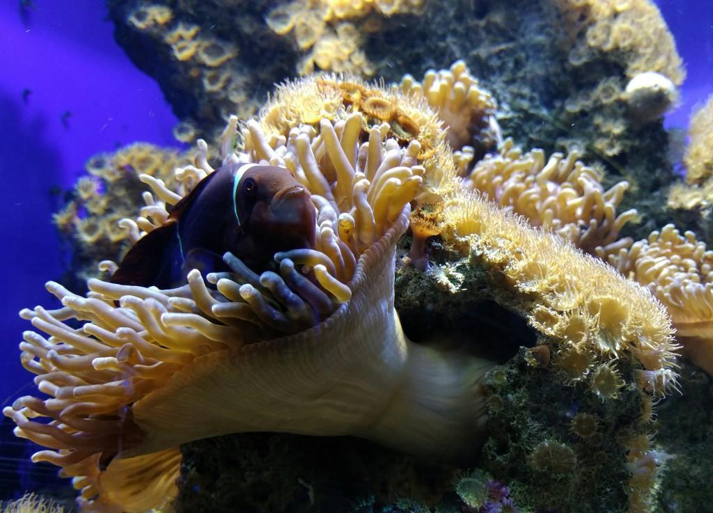 Pez Payaso, Getxo Aquarium