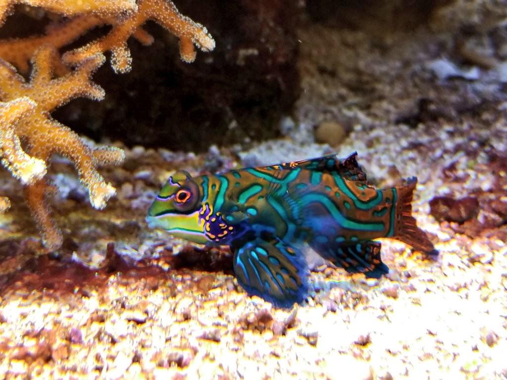 Pez tropical, Getxo Aquarium
