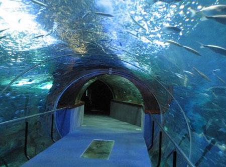 Los 12 museos de gipuzkoa m s importantes - Aquarium donosti precio ...