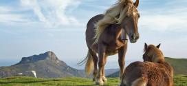 Naturaleza del país vasco