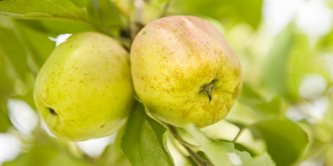 Manzanas, Sagardotegiak