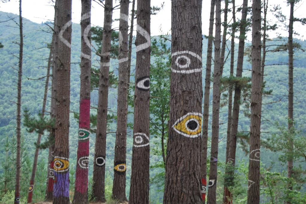 Ojos en el bosque de Oma
