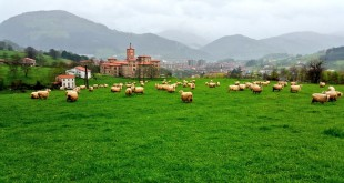 Rebaño de Berastegi