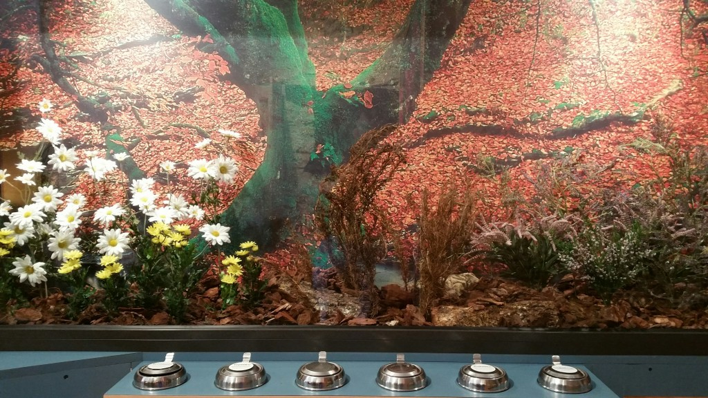 Experiencia olfativa, Museo de la miel Murgia