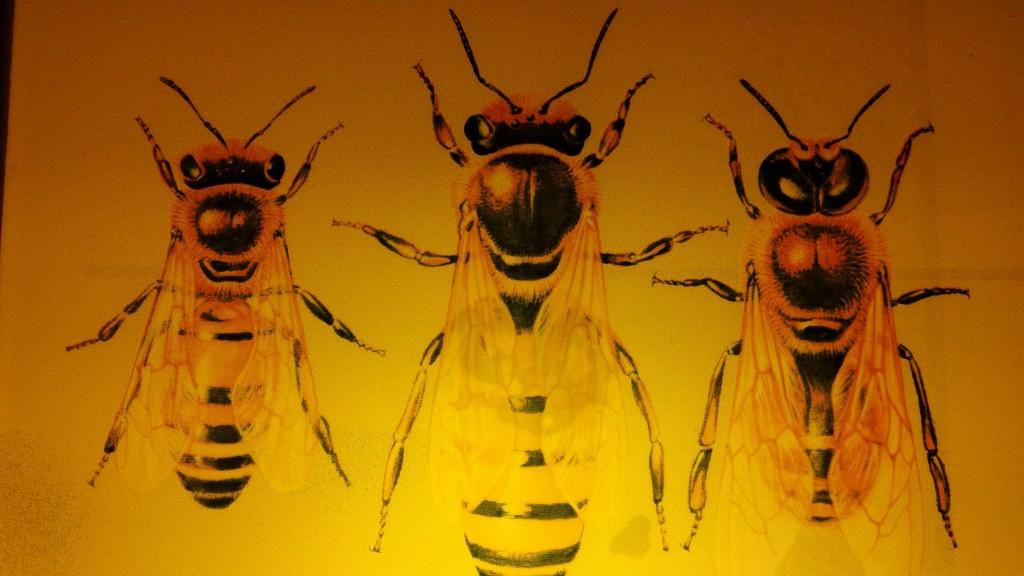 Tipos de abeja, individuos de la colmena