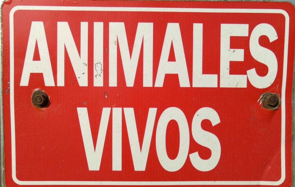 Animales vivos, feria, azoka
