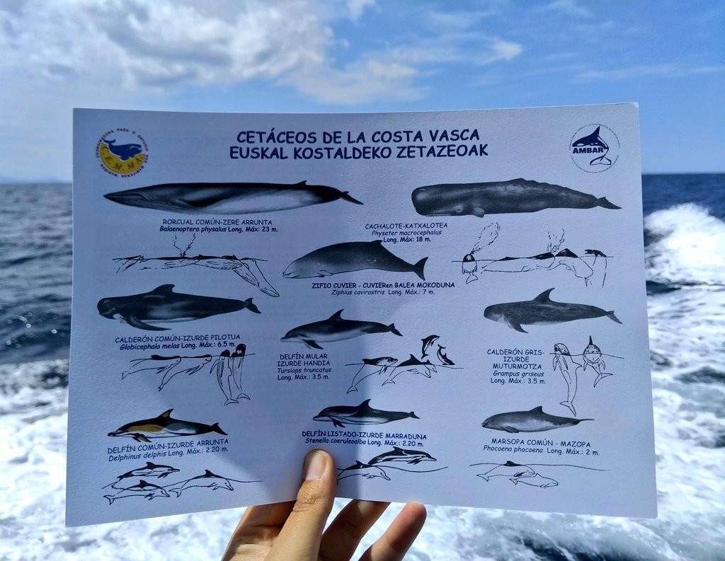 Cetaceos de la costa vasca
