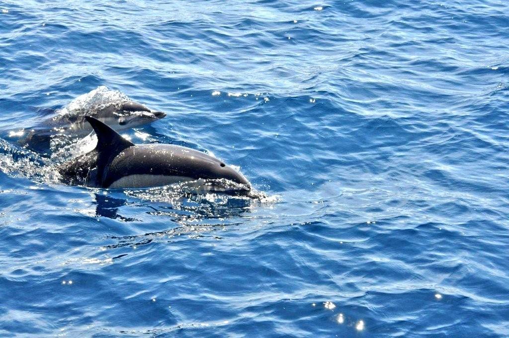 Delfines en la costa vasca
