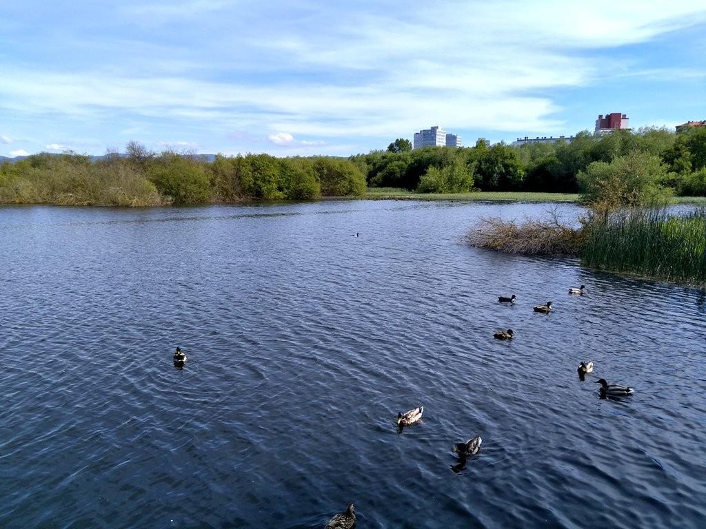 Salburua patos y naturaleza