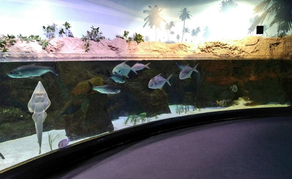Aquarium de Biarritz, agua caliente