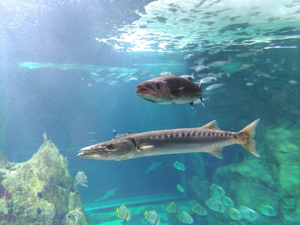 Estanque del Aquarium de Biarritz