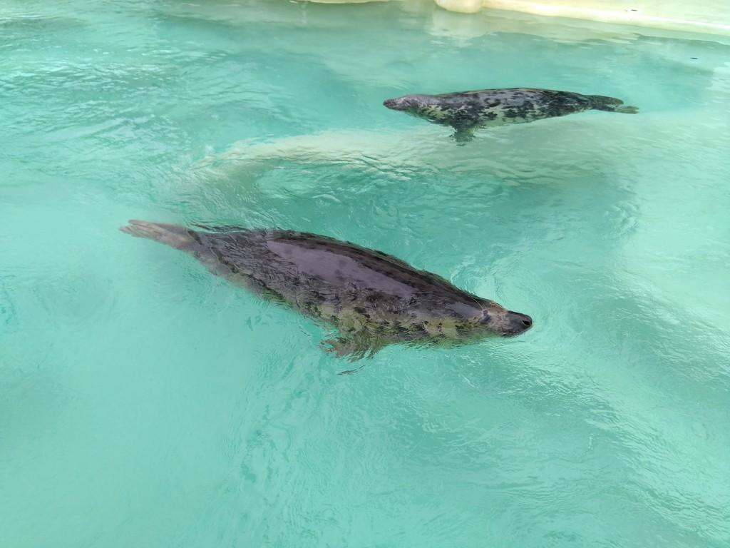 Focas del aquarium de Biarritz