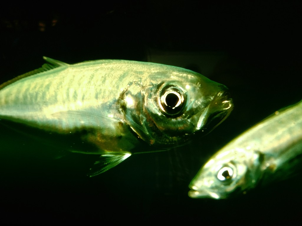 Peces aquarium de Biarritz