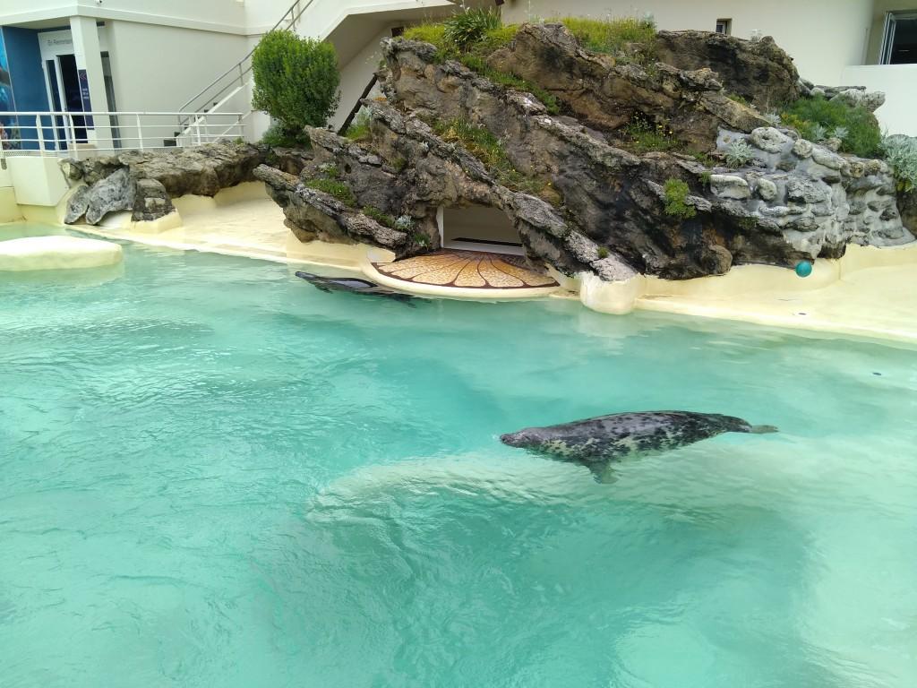Piscina de las focas en el Aquarium de Biarritz
