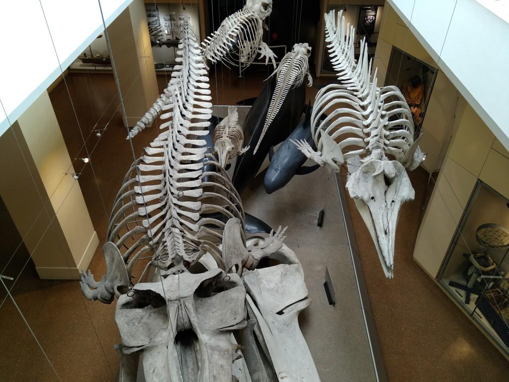 Sala de cetaceos en el Aquarium de Biarritz