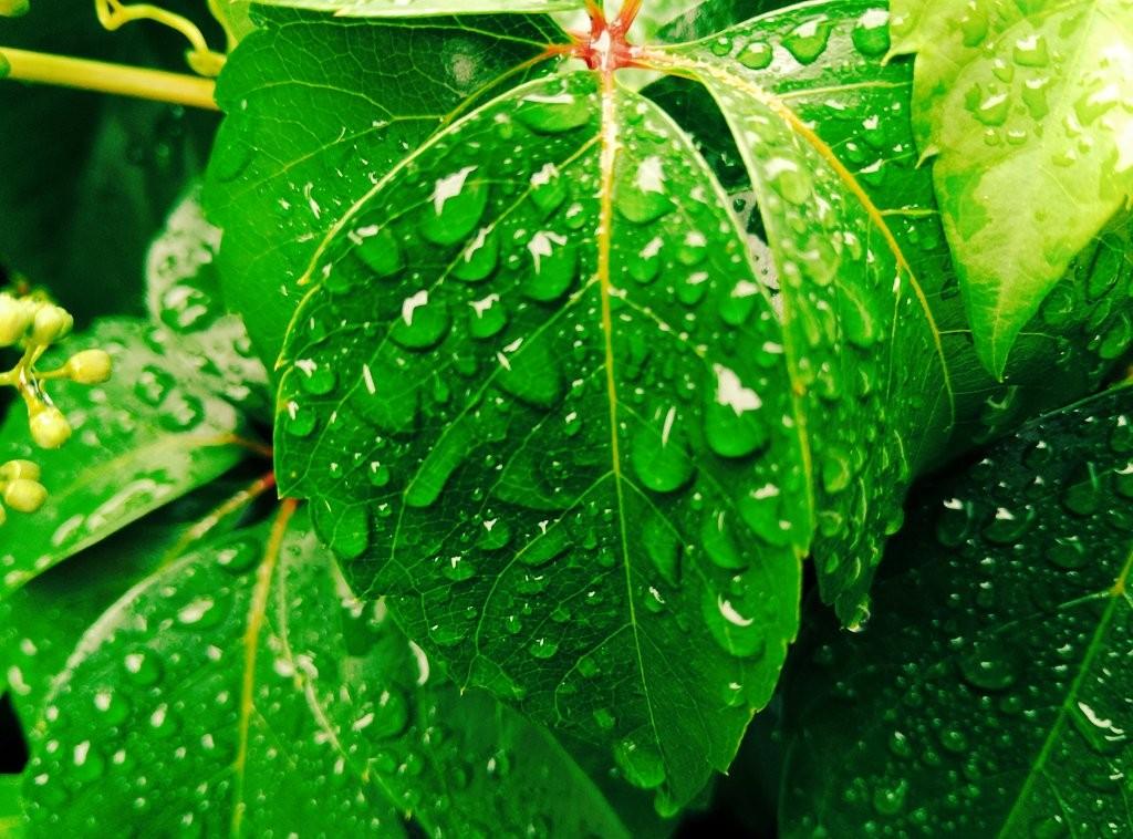 Agua, gotas, lluvia, naturaleza, señorio de Bertiz