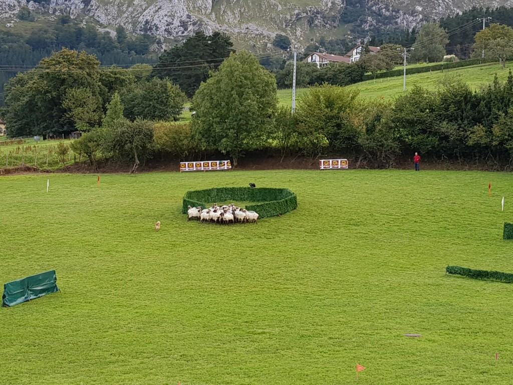 2 ejercicio, Campeonato de perros pastores de Euskal Herria