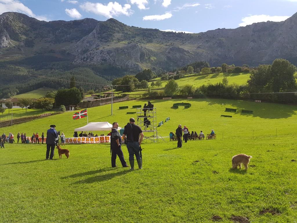 Entorno, Campeonato de perros pastores de Euskal Herria