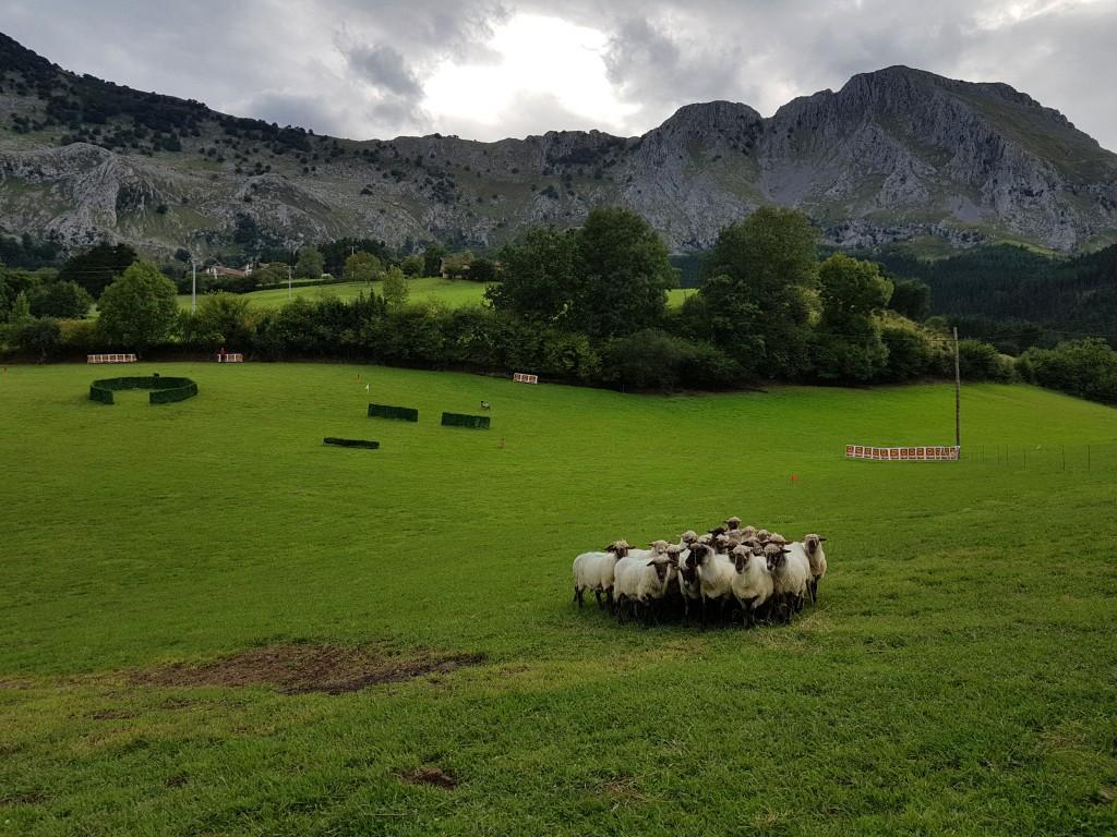 Ovejas, Campeonato de perros pastores de Euskal Herria