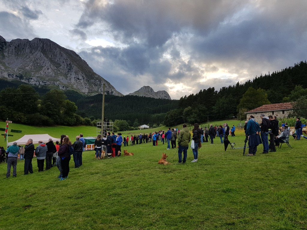 Publico, Campeonato de perros pastores de Euskal Herria