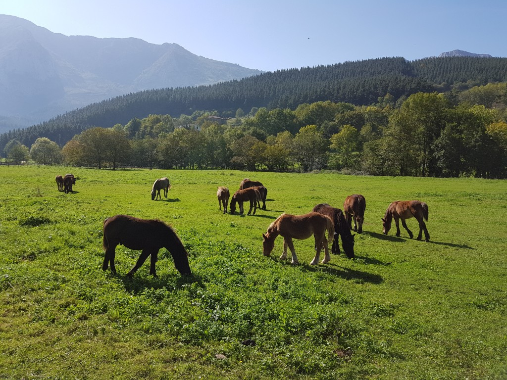 Caballos via verde de Arrazola