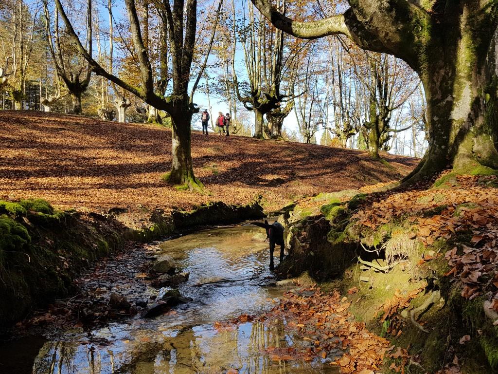 Hayedo de Otzarreta desde el rio