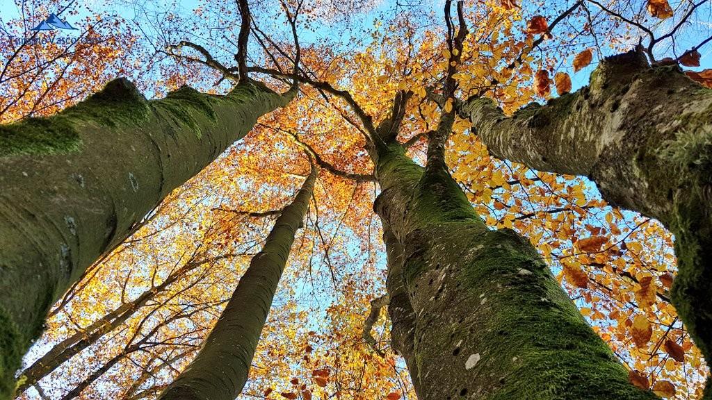 Ramas de los árboles del Hayedo de Otzarreta