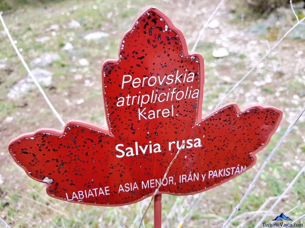 Salvia en el Jardín Botánico de Santa Catalina