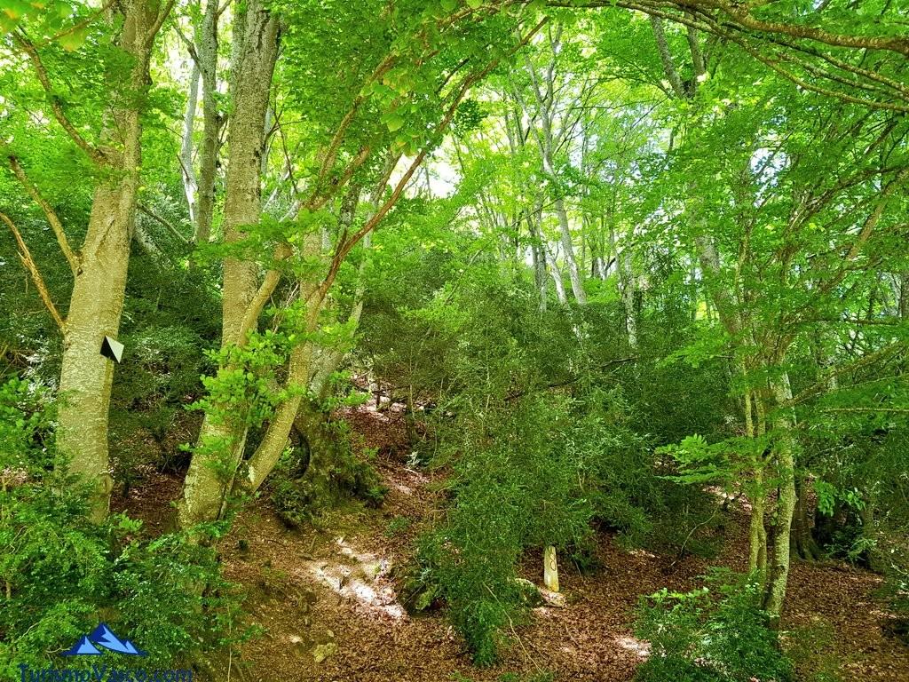Bosque de la ruta del agua de Berganzo