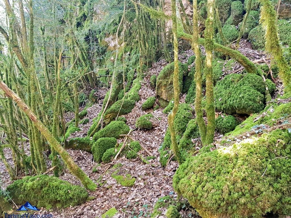 Camino pirineo navarro
