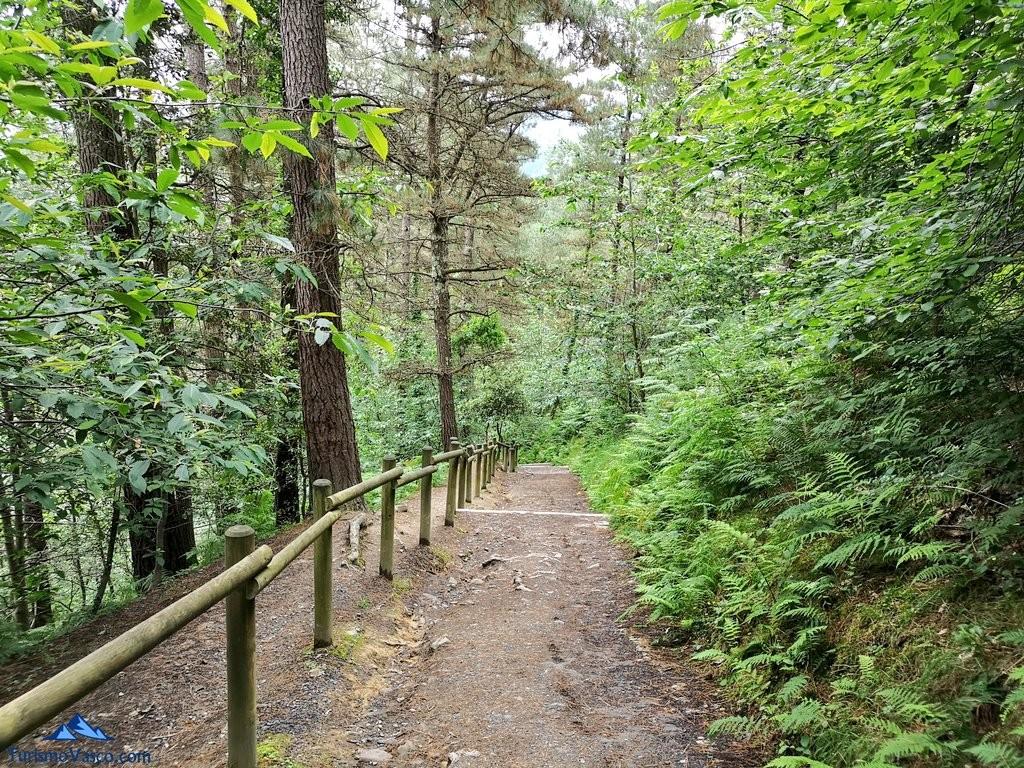Camino de bajada hacia el Bosque de Oma, el Bosque Pintado