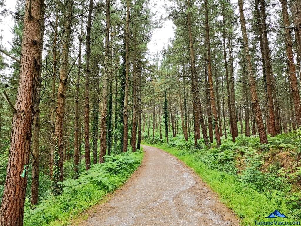 Camino de ida al Bosque de Oma, el Bosque Pintado
