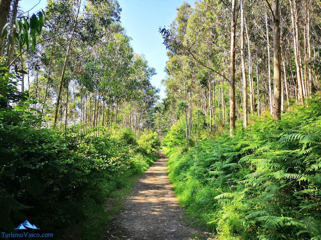 Camino de tierra de en la ruta a Ogoño